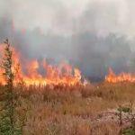 फरीदाबाद के खेतों में लगी भयंकर आग, 6 एकड़ फसल जलकर खाक