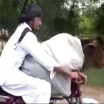 जब पाकिस्तान शख्स ने गाय को बाइक पर बिठा फर्राटेदार दौड़ाई गाड़ी