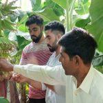 अलावलपुर में किसान बागवानी की खेती कर कमा रहे हैं अधिक मुनाफा