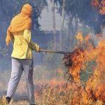 खट्टर सरकार का फैसला : पराली जलाने की सूचना देने पर मिलेगा 1000 रुपए का इनाम