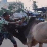 जब सड़क पर दिखा बाहुबली का 'भल्लालदेव', सांड को चटा दी धूल