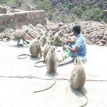 फरीदाबाद : अब लॉक डाउन में भूखा नहीं रहेगा कोई भी बंदर