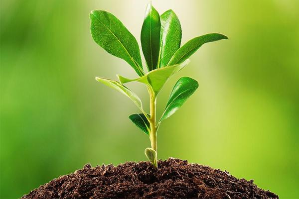 पौधों की होम डिलीवरी कराएगा वन विभाग, प्रदेश में 1.25 करोड़ पौधे