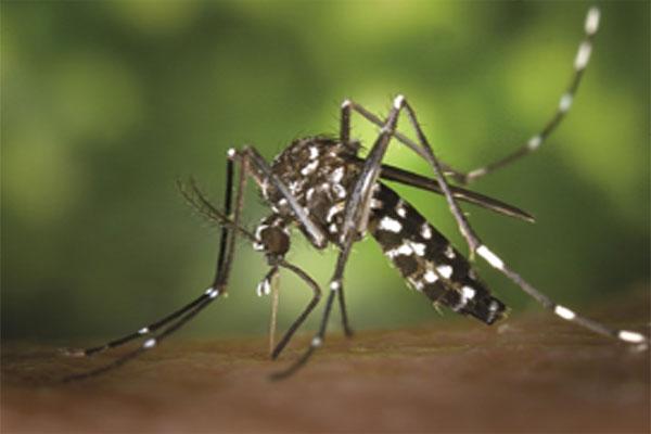 बारिश में बढ़ सकता है इन बीमारियों का खतरा, लक्षण और बचाव, जानने के लिए देखिये रिपोर्ट