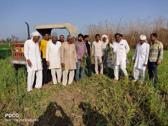 किसान किसानों के समर्थन में ओमप्रकाश ने ने अपनी फसले बर्बाद कर दी
